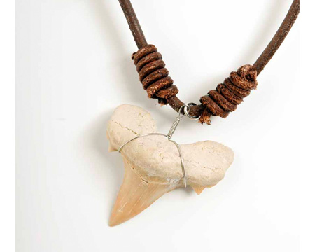 Photo of otodus shark tooth necklace