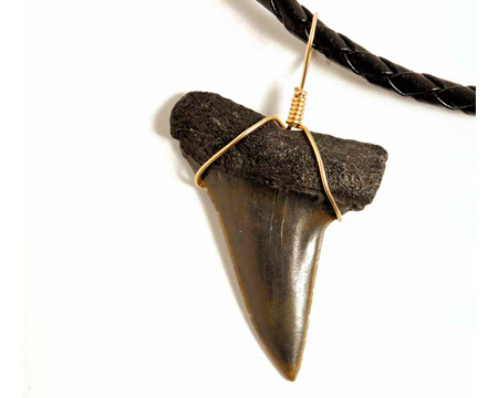 Photo of a mako shark tooth necklace