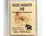 Photo of mammoth hair